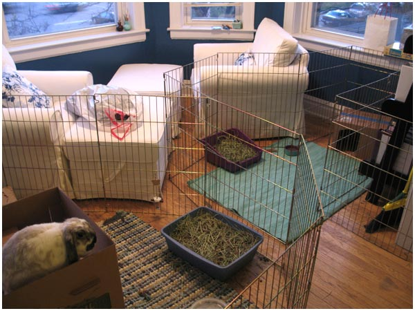 It S Next To Baxter Area But Separated Both Bunnies Will Be Able See One Another Won T Have Direct Contact Just Yet