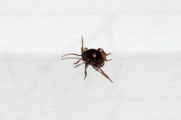 Can You Identify This Bug Avoisioncom