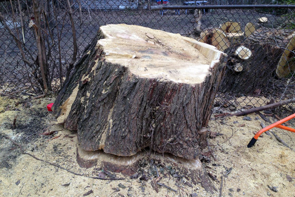 Backyard Tree Removal: Before and After Photos - avoision ...