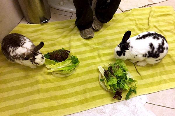 bunnyBathroomBonding_4