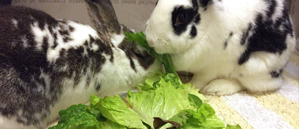 Bunny Bonding: Grooming and Reciprocation