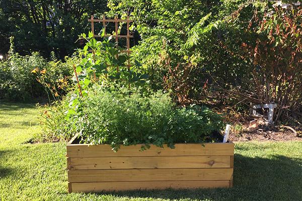 gardenBoxTimelapse-06