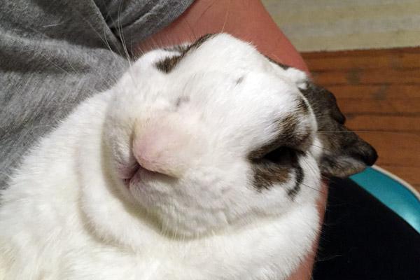 bunnycloseup-1