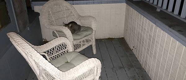 An Unexpected Porch Guest