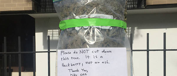 A Plea for a Tree